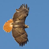 U.S. Forest Service - Birds of the Lake Tahoe Basin